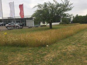Wiese Rasen Muster gemäht