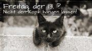 K800_cat-friday