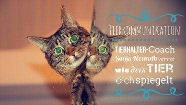 Tierkommunikation Mit Tieren sprechen