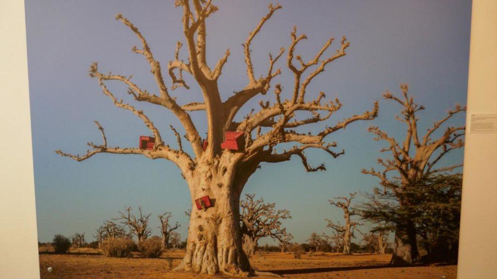 Horst Wackerbarth Baobab