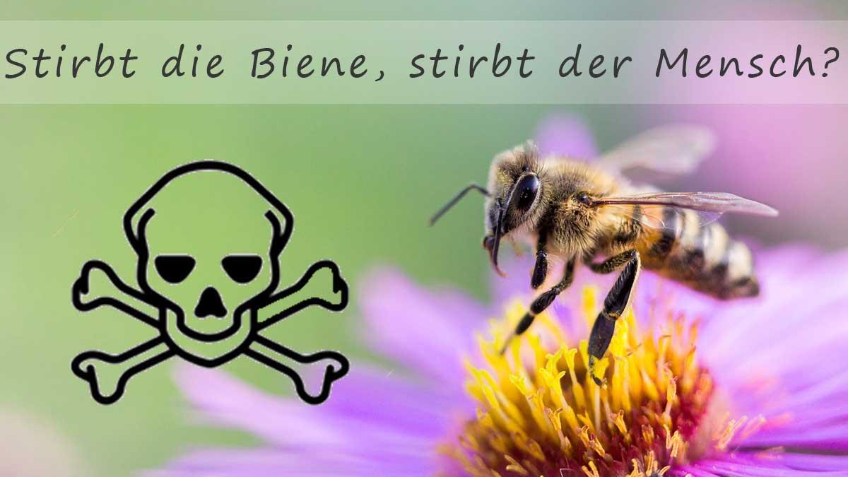 Photo of Bienensterben? Das betrifft uns alle!
