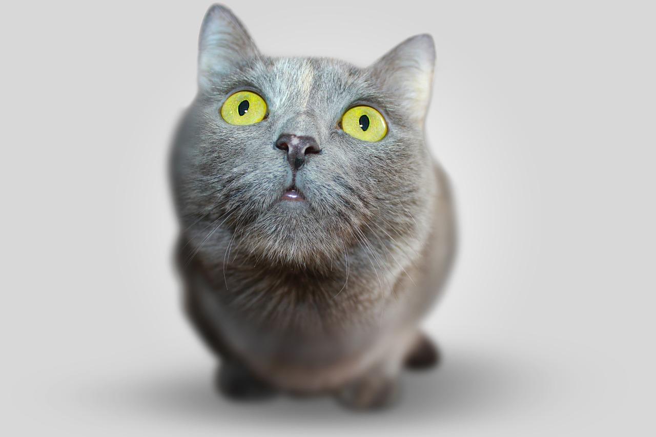 was die Katze glücklich macht