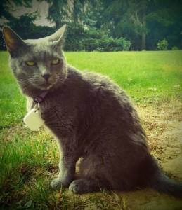 g-tag für Katze