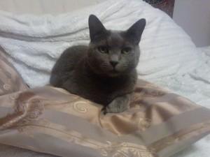 Katze guckt fern