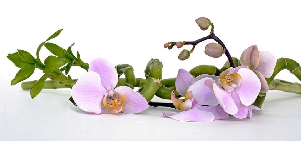 Sprache der Blumen, Bambus