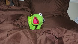Kermit im Bett