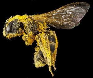 Biene Funktion