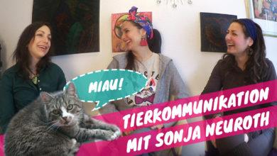 Tierkommunikation Katze, Sonja Neuroth, Klaudija Paunovic, Ariana