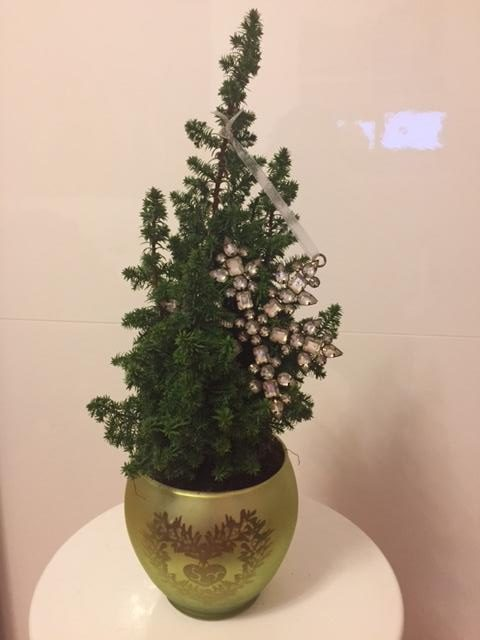 massensterben der weihnachtsb ume alternativen zum tannenbaum to go lifestyle. Black Bedroom Furniture Sets. Home Design Ideas