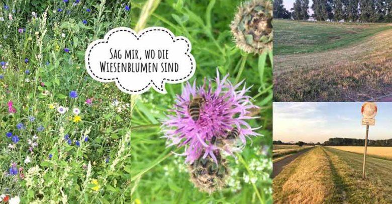 Photo of Sag mir, wo die (Wiesen-)Blumen sind! Vom Wiesenmähen und Insektensterben