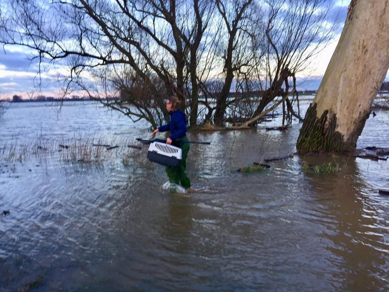Wildtiere retten am Rhein vor Hochwasser, Marion Baers